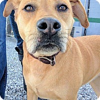 Adopt A Pet :: Rayna - Knoxville, TN