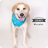 Adopt A Pet :: Murphy - Houston, TX