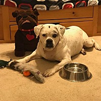 Adopt A Pet :: Evergreen - Homestead, FL