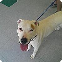 Adopt A Pet :: Patch - Geismar, LA