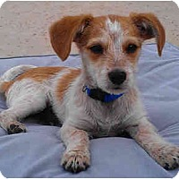 Adopt A Pet :: CHIP - Phoenix, AZ