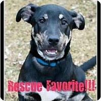 Adopt A Pet :: BAXTER!!  RESCUE FAVORITE!! - Haverhill, MA