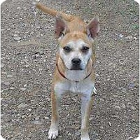 Adopt A Pet :: Mya - Chandlersville, OH