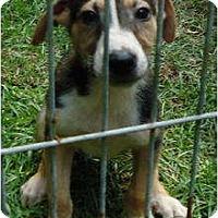 Adopt A Pet :: Ringo - Pike Road, AL