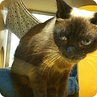 Adopt A Pet :: Marge - Monroe, GA