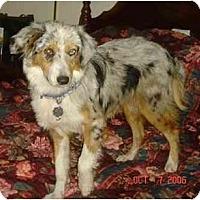 Adopt A Pet :: Kate - Orlando, FL