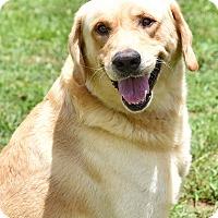 Adopt A Pet :: Logan - New Canaan, CT