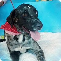 Adopt A Pet :: Oreo - Odessa, TX