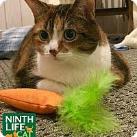 Adopt A Pet :: Sunday - Oakville, ON