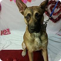 Adopt A Pet :: Maxine 2-Adopted! - Detroit, MI