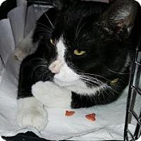 Adopt A Pet :: Don Draper - New York, NY