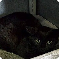 Adopt A Pet :: Ebony - Mount Sterling, KY