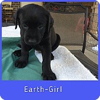 Adopt A Pet :: Earth - Plano, TX