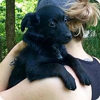 Adopt A Pet :: Jeffrey - Stamford, CT