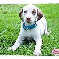 Adopt A Pet :: Tara - Haverhill, MA