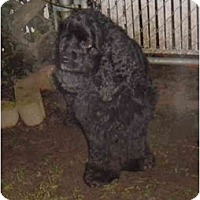 Adopt A Pet :: Dexter - Tacoma, WA