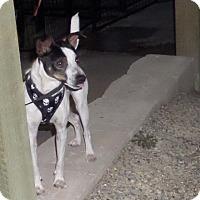 Adopt A Pet :: Morty - Chewelah, WA
