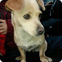 Adopt A Pet :: Jessie--courtesy post - Valley Springs, CA