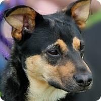 Adopt A Pet :: Tiffa - Portland, IN