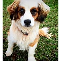 Adopt A Pet :: Niko - Fort Valley, GA