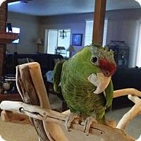 Adopt A Pet :: Sam - Redlands, CA