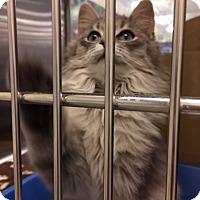 Adopt A Pet :: Everest - Byron Center, MI