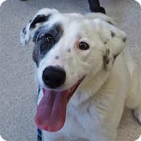 Adopt A Pet :: Diamond - Grants Pass, OR