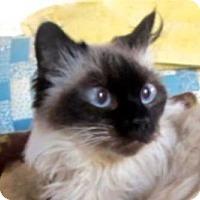 Adopt A Pet :: Mirabelle - Davis, CA