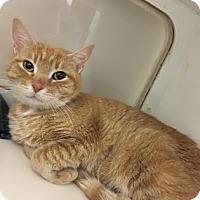 Adopt A Pet :: Nadia - Suwanee, GA