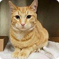 Adopt A Pet :: Adrian - New York, NY