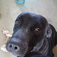 Adopt A Pet :: Cinder - Marianna, FL