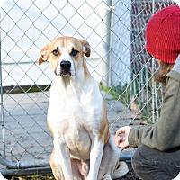 Adopt A Pet :: Smokey - Virginia Beach, VA