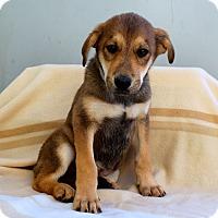 Adopt A Pet :: Babushka - Los Angeles, CA