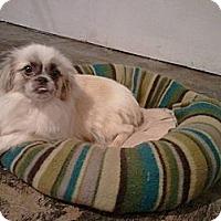 Adopt A Pet :: Tiny  (Charleston, WV) - Vansant, VA