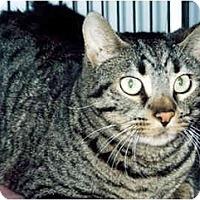Adopt A Pet :: Tyler - Medway, MA