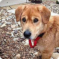Adopt A Pet :: Luke - Plainfield, CT