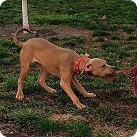 Adopt A Pet :: Jessa - Sacramento, CA
