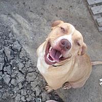 Adopt A Pet :: Carmella - Alvarado, TX