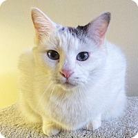Adopt A Pet :: Scarborough - St. Louis, MO