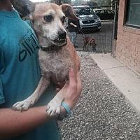 Adopt A Pet :: Buddy - Albemarle, NC