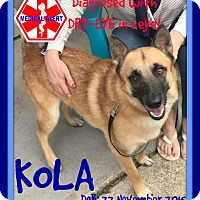 Belgian Malinois/German Shepherd Dog Mix Dog for adoption in Manchester, New Hampshire - KOLA