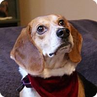 Adopt A Pet :: Trooper - Dundee, MI
