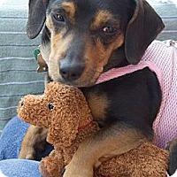 Adopt A Pet :: Faith - NJ - Jacobus, PA