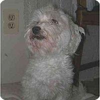 Adopt A Pet :: Max - Clementon, NJ