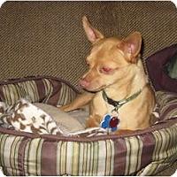 Adopt A Pet :: Romeo - Commerce City, CO