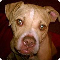 Adopt A Pet :: Twiggy (Twig-A-Licious) - Seattle, WA