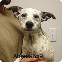 Adopt A Pet :: Abee - Greencastle, NC