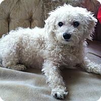 Adopt A Pet :: BROOK - East Hanover, NJ