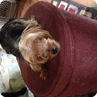 Adopt A Pet :: Bertie - Butler, OH