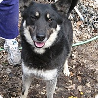 Adopt A Pet :: Vinney - Parsippany, NJ